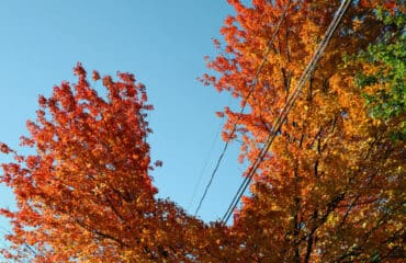 Electrical Safety in the Fall